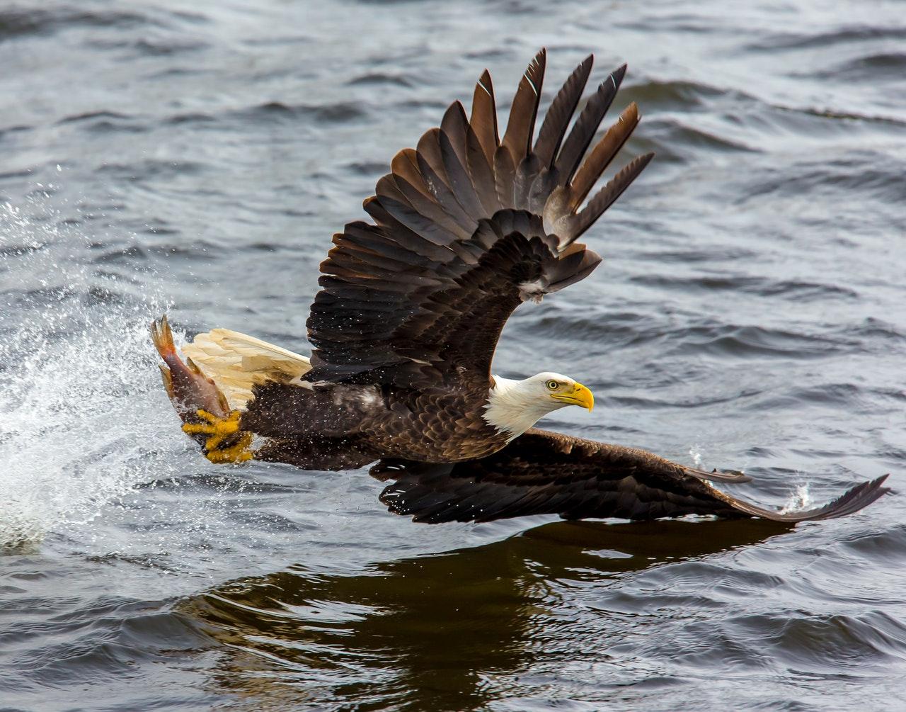 balt eagle atozmomm.com