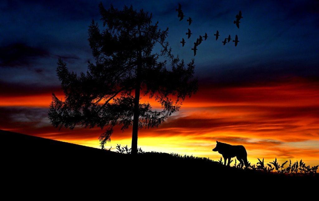atozmomm.com wolf
