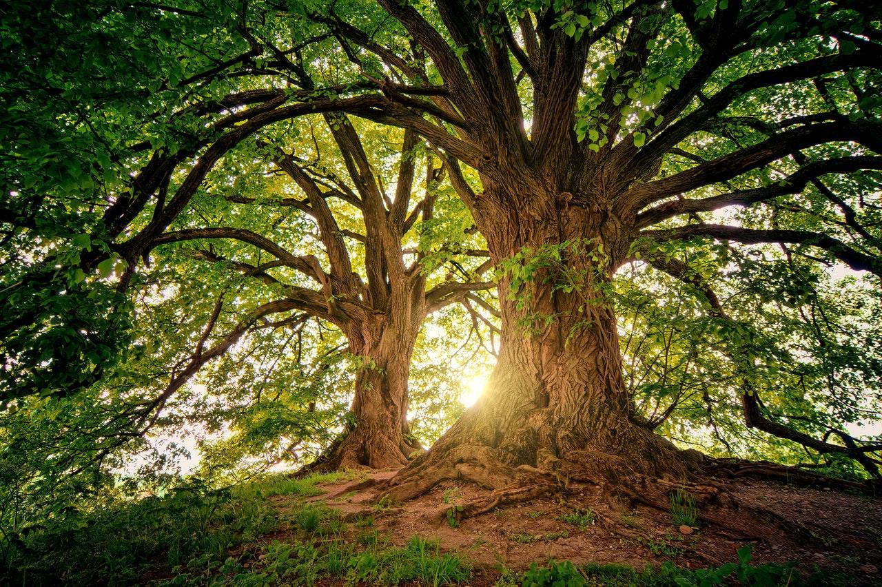 tree of knowledge garden of eden www.atozmomm.com