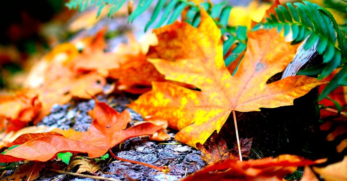 www.atozmomm.com fall leaves