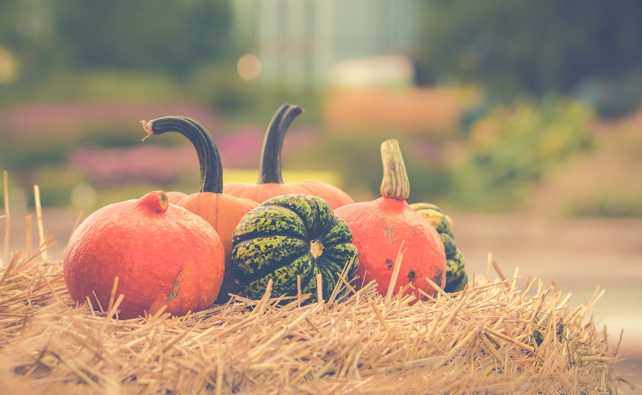 www.atozmomm.com pumpkins