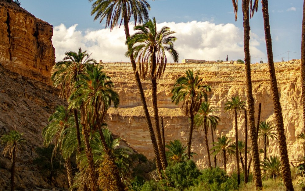 genesis 20 negev desert oasis www.atozmomm.com