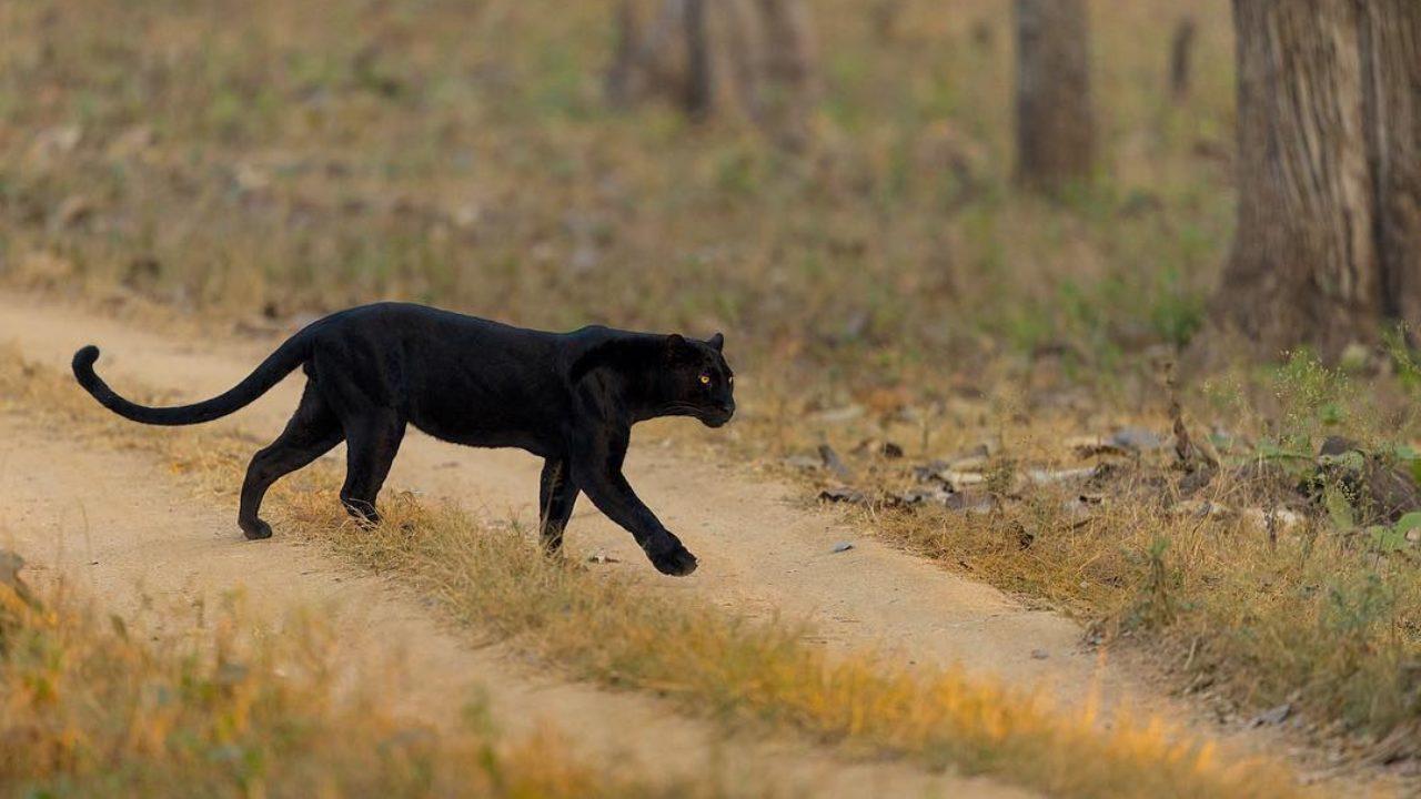 black panther www.atozmomm.com