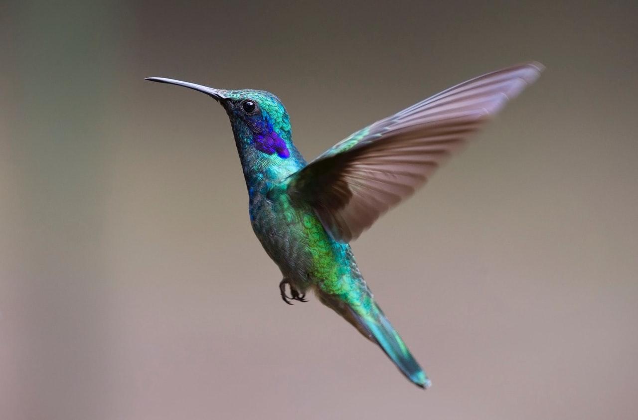 humming bird www.atozmomm.com