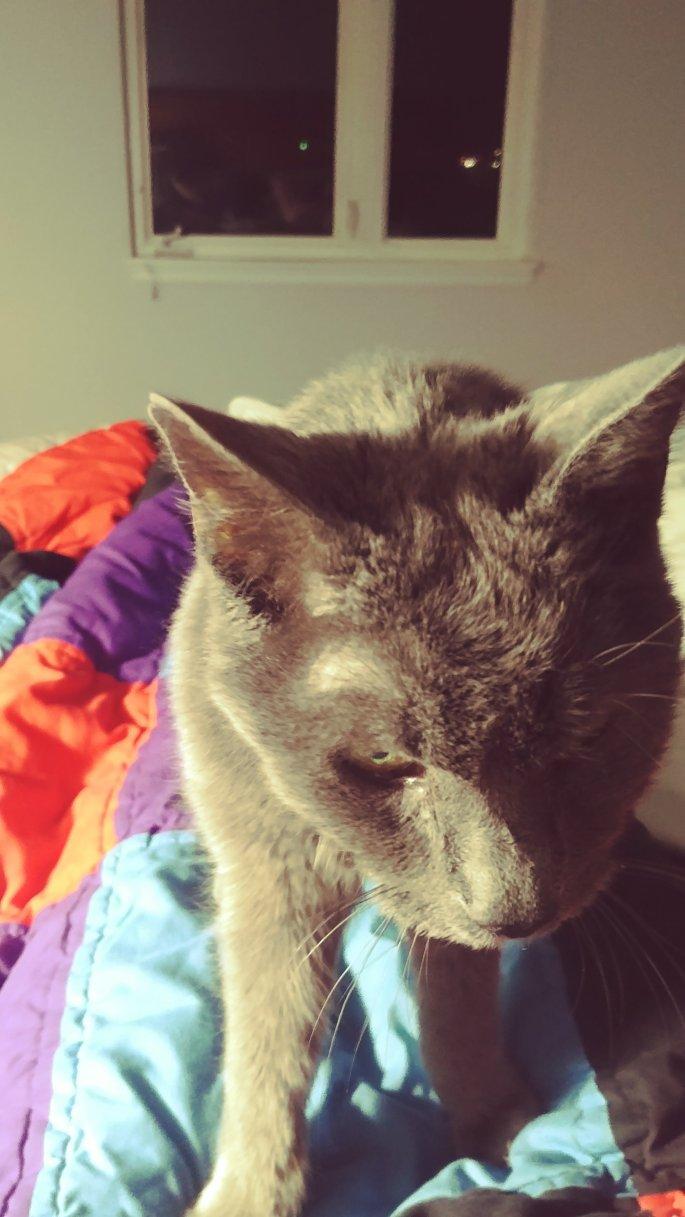 my kitty in heaven www.atozmomm.com