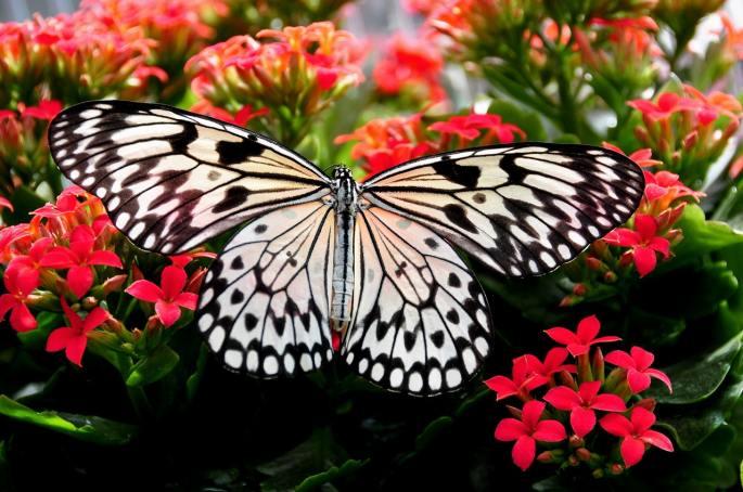 www.atozmomm.com summer bible study online bsf wordgo study of hebrews butterfly
