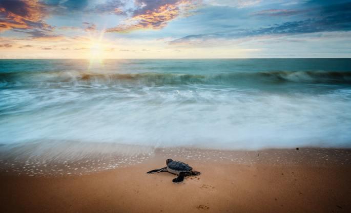 turtle in the sea www.atozmomm.com