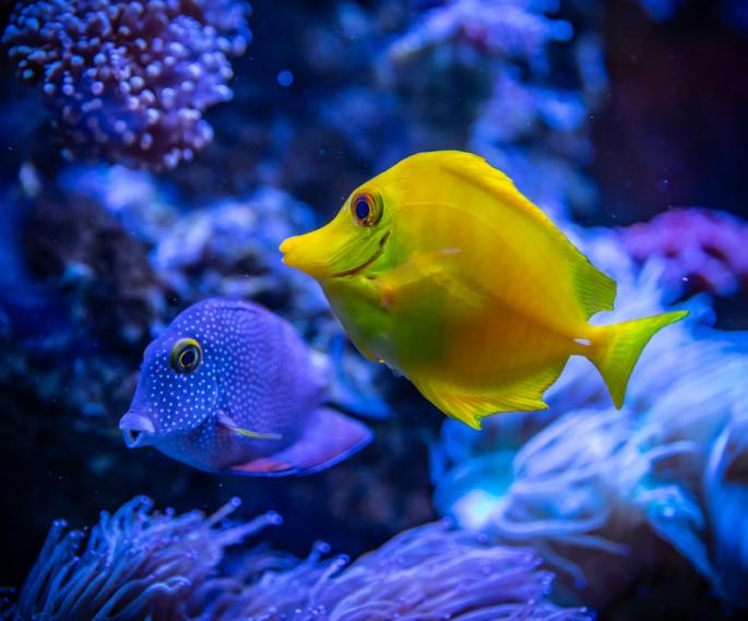 fish www.atozmomm.com