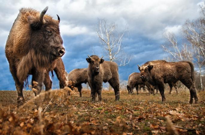 www.atozmomm.com buffalo