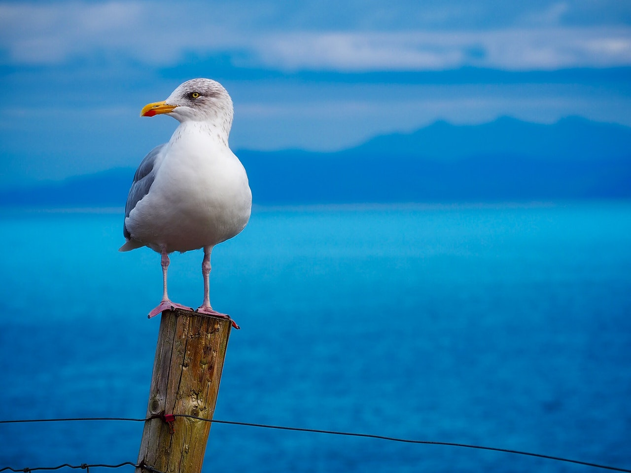 www.atozmomm.com summer bible study online bsf wordgo study of hebrews seagull