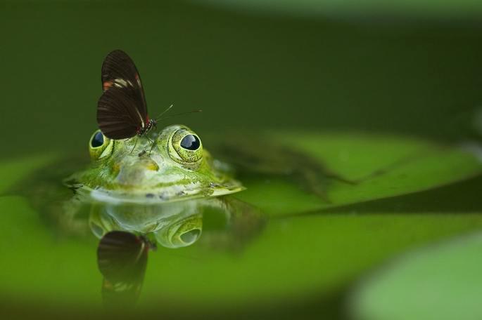 www.atozmomm.com summer bible study online bsf wordgo study of hebrews frogs and butterflies